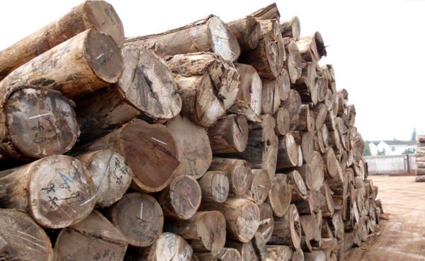 总投资10亿元,中林集团大连木材产业园区项目开工